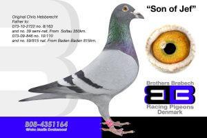 Bel-08-4351164 Søn af Jef