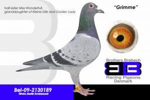 BEL-09-2130189