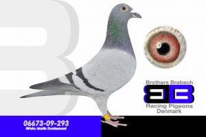 BEL-09-6130605