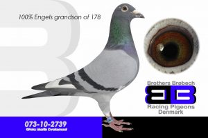 DAN073-10-2739