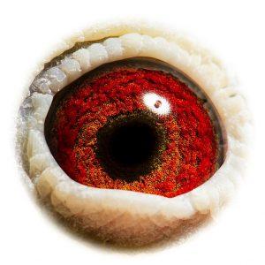 DAN073-08-668_eye
