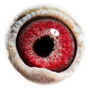 DAN073-10-2612_eye