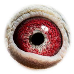 DAN073-11-2200_eye