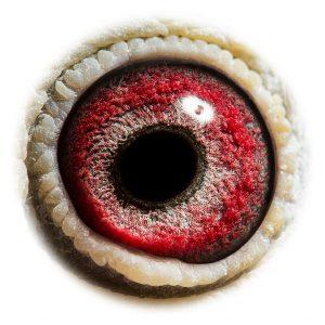 DAN073-11-2248_eye