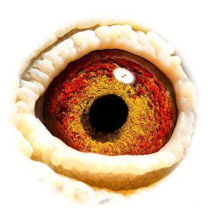 BE07-6110060_eye