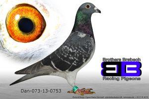 DAN073-13-753