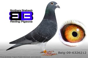 BEL-09-6326212