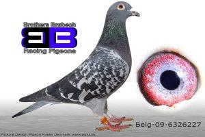 BEL-09-6326227 Org. Geerinckx