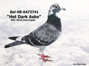 BEL-08-6373741