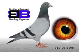 DAN115-06-1108 Stamhan