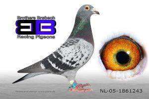 NL-05-1861243