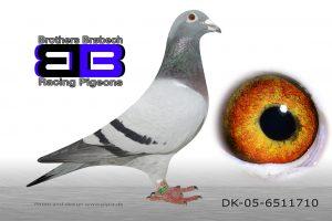DK-05-6511710