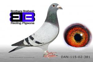 DAN115-02-381 Stamhun