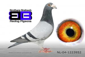 NL-04-1223952