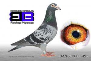 DAN208-00-495 Stamdue