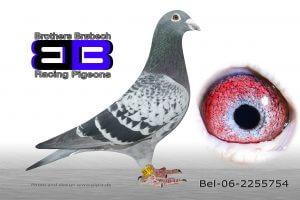 BEL-06-2255754