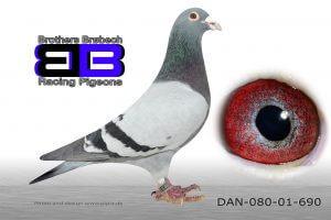 DAN080-01-690