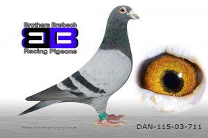 DAN115-03-711