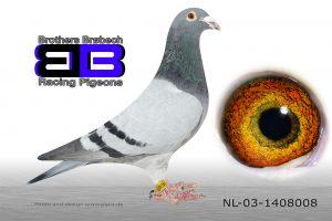 NL-03-1408008