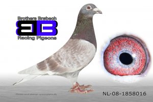 NL-08-1858016