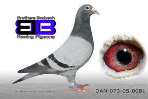 DAN073-05-81