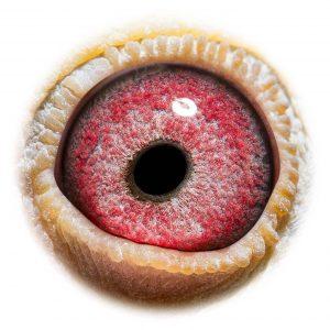 DAN073-15-2069_eye