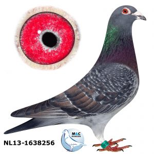 NL13-1638256 - Kopi