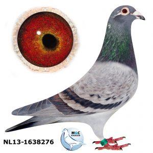 NL13-1638276 - Kopi