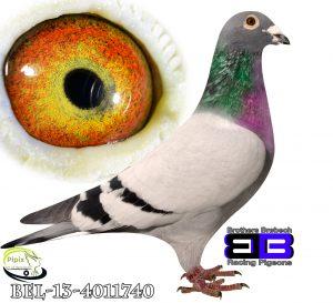 BEL-13-4011740