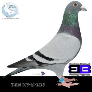 DAN073-15-2129