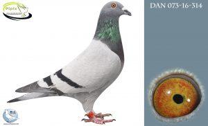 DAN073-16-314