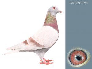 DAN073-17-794 100% Janssen