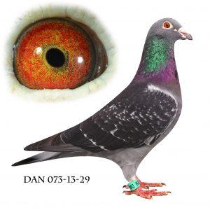 DAN073-13-29 Van der Wegen. Søn af 314