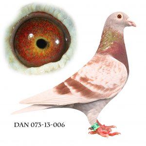 DAN073-13-6 Janssen. Datter af Snow vos