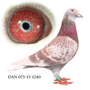DAN073-13-1240 Janssen – Klak. Far til nr. 3 Nat. Frieburg 906km