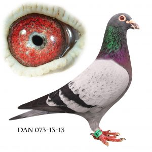 DAN073-13-13 Søn af 87 Nationalvinder fra München
