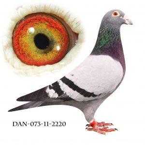 DAN073-11-2220 Blå Brøbech. Superdue