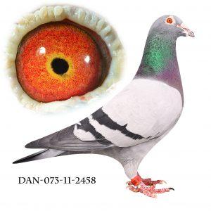 """DAN073-11-2458 """"Kongen"""" Nr. 2/829 semi-nat. fra Gohta 581km"""