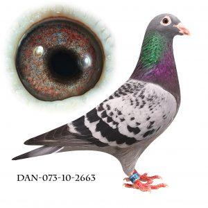DAN073-10-2663 Jos De Klak. Barnebarn af 613