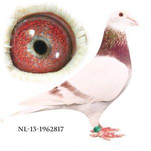NL-13-1962817 Janssen. Superavler