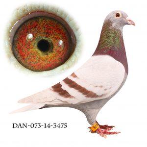 DAN073-14-3475 Janssen. Mor til to sektions vindere