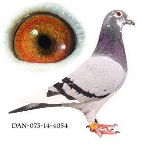 DAN073-14-4054 Flor Engels Brøbech
