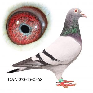 DAN073-13-568 Jos De Klak. Barnebarn af 613 Jos De Klak