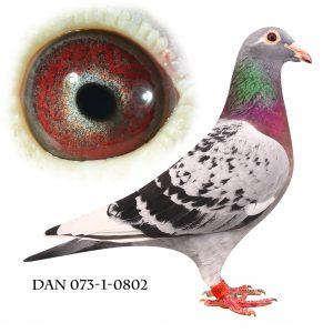 """DAN073-12-802 """"Beauty Wittekop"""" Geerinckx"""