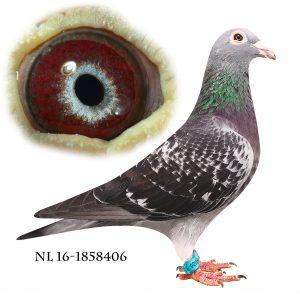 NL-16-1858406 Jan Aarden
