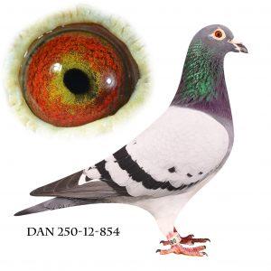 DAN250-12-854 Flor Engels. Dobbelt barnebarn af 178