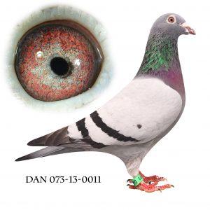 DAN073-13-11 Jos De Klak. Barnebarn af Knook