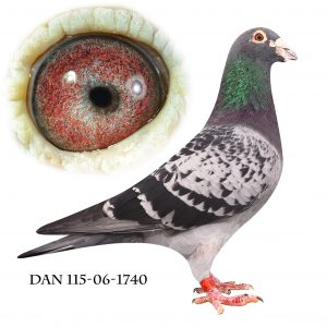 DAN115-06-1740 Søn af 572. Superavler