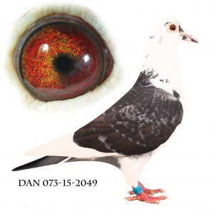 DAN073-15-2049 Meget indavlet på 192+573