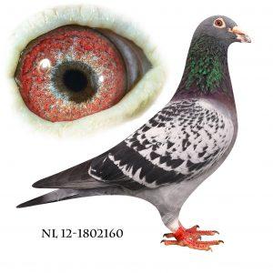NL-12-1802160 Janssen. Merckx